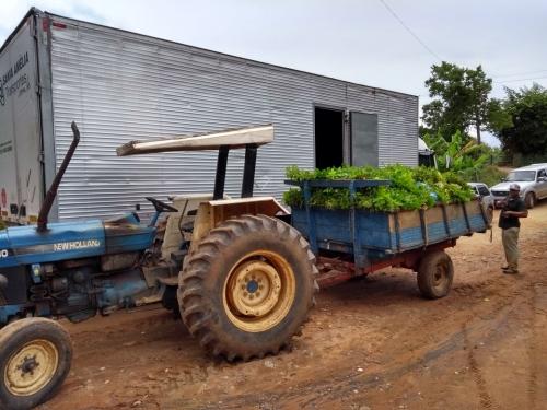 SOS Mata Atlântica e IPH realizam plantio de cerca de 20 mil mudas na Fazenda do Senhor Jesus